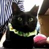幸せを呼ぶ黒猫★仔猫のように小柄な成猫★メス