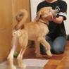 生後4ヶ月で11キロ、表情豊かなフクくん! サムネイル4