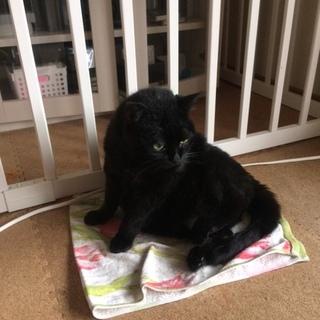 おとなしくて人なつっこい黒猫ちゃんです♪