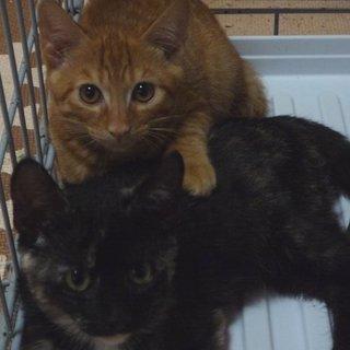 優しい性格3兄妹子猫