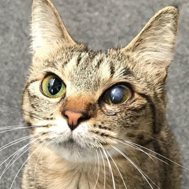 Cat Linkのカバー写真