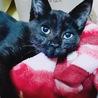 世界で二番目に可愛い黒子猫