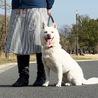 抱っこ大好き紀州犬の女の子★ サムネイル2