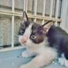 子猫1ヶ月ぐらいおとなしい子です。
