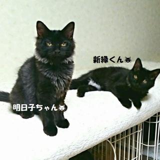 黒猫mix仲良し兄妹♪