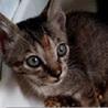 アンカー♡真夏の道路で放置されていた6兄妹と母猫