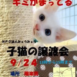 弟6回 NPO法人みゅうみゅう ねこの譲渡会!!