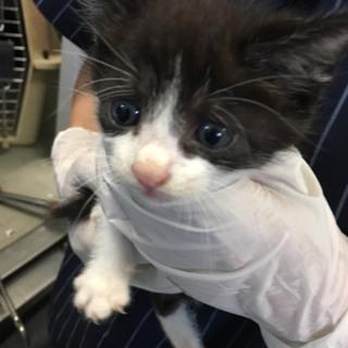 可愛い仔猫が保健所でまってます!