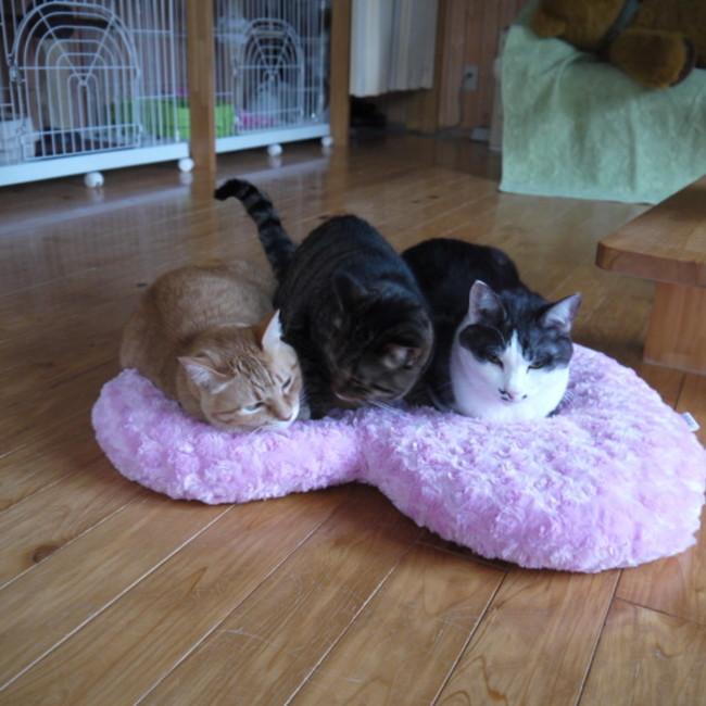 猫カフェ Nha Con Meoのカバー写真