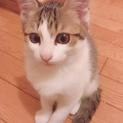 約2ヶ月子猫ちゃん