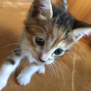 子猫もらってくれる人募集