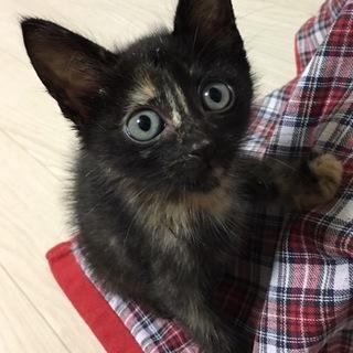 サビ子猫ちゃん