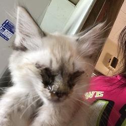今日見つけた野良猫。