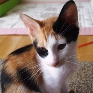 カンナちゃん   3ヶ月くらいの女の子