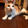 姉御肌な綺麗なキジミケの女の子 サムネイル4