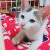 生後2〜3ヶ月の子猫 里親募集!