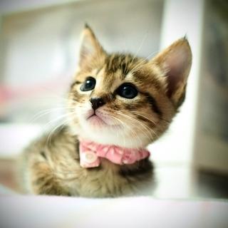 ミルク育ちの美猫