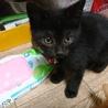 野良子猫保護してます。くろちゃん
