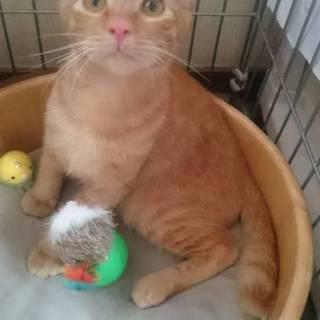 野良子猫保護してます。きんちゃん