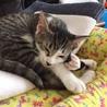 袖猫のミミィちゃん サムネイル2