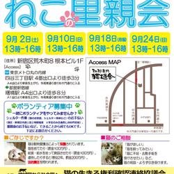 9月10日(日)地域猫から社会猫へ FIPフリー・四谷猫廼舎(ねこのや)里親会(ボランティア募集中)