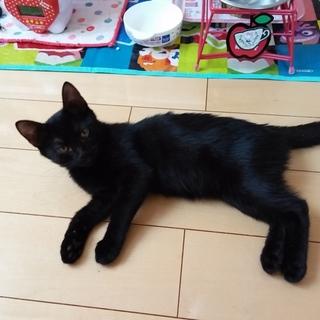 甘えん坊で、可愛い黒猫マロ子ちゃんです。