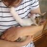 やんちゃで甘えん坊な子猫、キジシロくん♪ サムネイル6