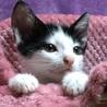 前髪がチャーミングな子猫、かつらちゃん♪ サムネイル3