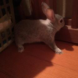 ウサギサムネイル