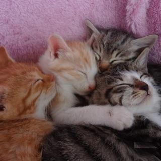 『ねこ猫ネコの会』の仔猫ちゃん達に応募はこちら