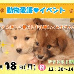 動物愛護イベント