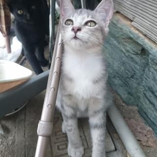 美猫のさくらちゃん