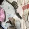 お風呂から上がったらいつものとこに見当たらず、布団で寝ていたのを発見、激写(=´∀`)人(´∀`=)