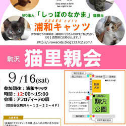 Evaさん主催「駒沢・猫里親会」