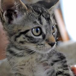 Evaさん主催「駒沢・猫里親会」 サムネイル2