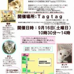 電車でも行ける!猫譲渡会☆猫雑貨も販売! サムネイル1