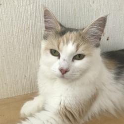 9/18(月・祝日)保護猫譲渡会