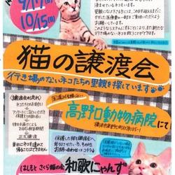 猫の譲渡会☆台風のため中止