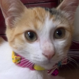 何にでも興味を示す元気な三毛子猫