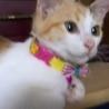 何にでも興味を示す元気な三毛子猫 サムネイル2