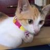 何にでも興味を示す元気な三毛子猫 サムネイル3
