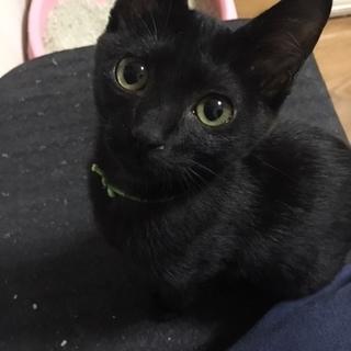 全身真っ黒な黒猫姉妹