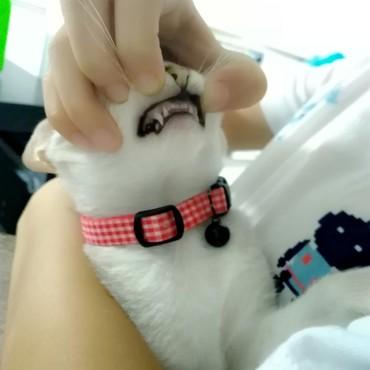 歯科検診。