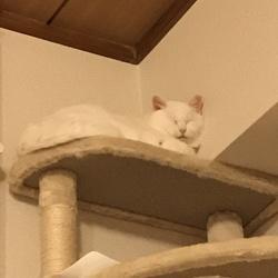 「穏やかに寝ております(但しお触り禁止は継続中)」サムネイル2