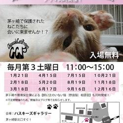 第58回 保護猫たちの幸せ探し会