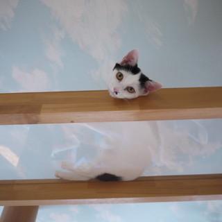 センターに持ち込まれた親子猫、里親様募集です。