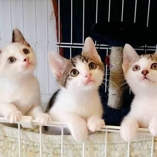 1.5ヶ月の小さな可愛い仲良し3匹