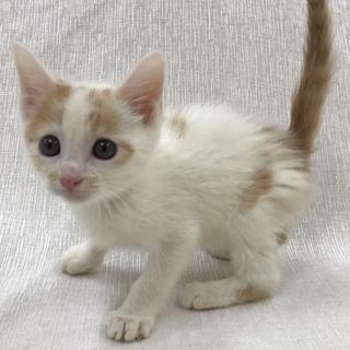 愛護センター引き出し子猫です。