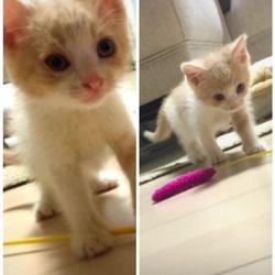 「9月8日保護の子猫」サムネイル1