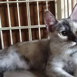 三重県桑名市 9月17日(日)ほんわか猫な日々 子猫の譲渡会